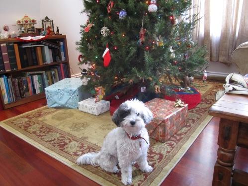 Nala says Merry Christmas