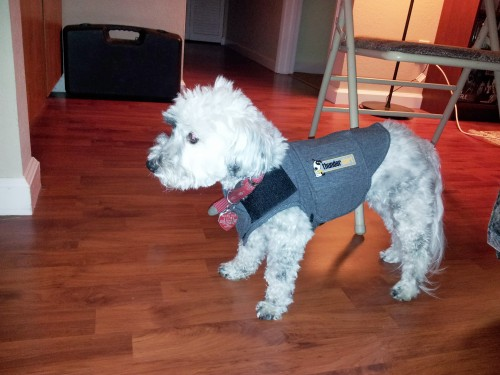 If the fireworks get too loud, Nala will wear her Thundershirt.