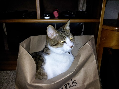 Saber made a lot of effort to get into this bag.