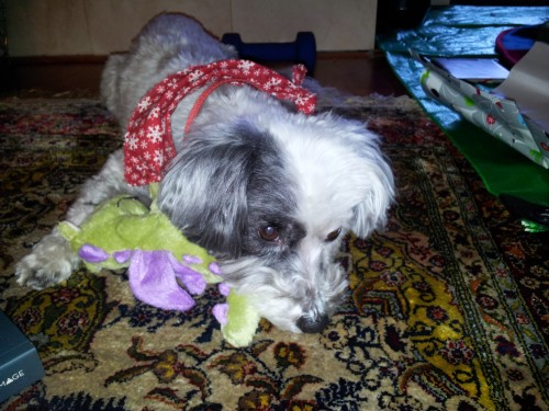 Nala is excited for 2014, too.