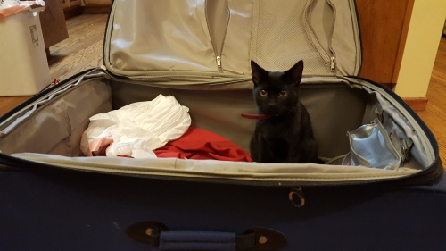 This kitten totally agrees with me and wants to take a journey himself.