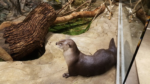 This is an otter. It is very cute and otherwise has nothing to do with this blog post.
